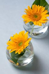 0908 flowers #7