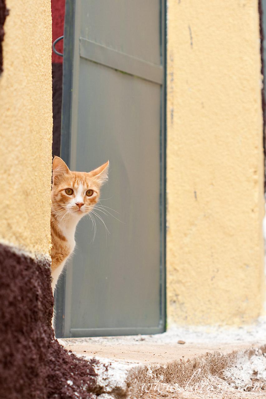 Cat #3, Harar, Ethiopia, July 2009