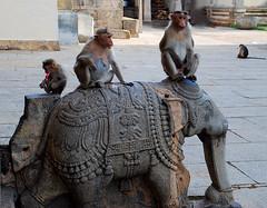 Hey! Are you listening to me ? (GOPAN G. NAIR [ GOPS Creativ ]) Tags: india heritage photography karnataka mysore srirangapatna gopsorg gopangnair