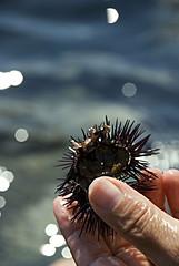 Appena pescato (squavi) Tags: augusta riccio sicilianit
