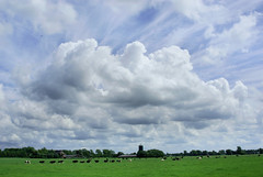 Harvesting Clouds (Hindrik S) Tags: blue sky color green nature clouds landscape blauw cattle sony horizon natuur bluesky vee blau friesland leeuwarden fee kleur a300 frysln liwwadden ljouwert cloudhunter kime sonyalpha cloudhunting absolutelystunningscapes 300 alpha300