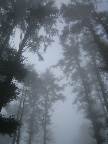 The fog enveloping the trees