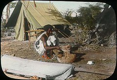 Somali man playing with two cheetah cubs (The Field Museum Library) Tags: africa cats expedition animal animals cat mammal wildlife cheetah cubs mammals animalia mammalia cheetahs somalia zoology cheetahcubs cheetahcub 1896 carnivora acinonyxjubatus felidae chordata acinonyx carlakeley specimencollection dgelliot