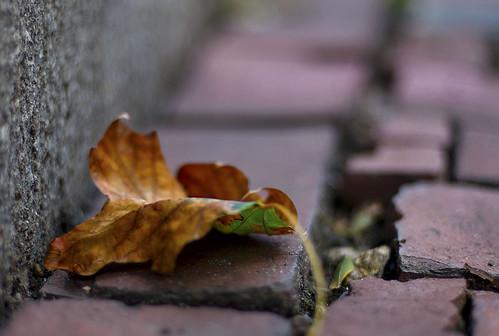 fallen... by fanjason