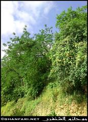 Trees Near to Ain Tabraq (Shanfari.net) Tags: dhofar governate sultanate oman darbat taqah   madeinat al haq   salalah taiq cave          raythut greenery flowers sony ericsson c905 plants khareef   hafa baleed tawi atir       tayq   ficus caria cows cow ittin    jabal jebel hamrair hamreer athoom tibraq   ain  spring zufar dofar salala dufar dhufar thofar thufar
