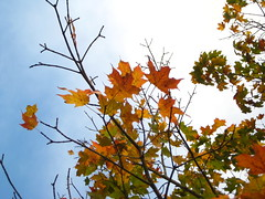 (Alejandro Imperial) Tags: autumn light sky nature colors beautiful leaves canon seasons angle god perspective thankful chaning poweshot sd1000