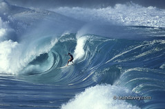 Marco Polo surfiing at waimea Shorebreak, 1997, model released (Sean Davey Photography) Tags: color horizontal oahu northshore seandavey finephotographyart photographersfineart marcopolowaimeabay hawaiishorebreak1997surfingsurferssurfmodelreleasedmr perfectsurfpicturessurfersgreenpoweroceanenergypictureswavesurferswavewavewatertubetubingbarrelbarrelingcurlcurlingfoamgreenglowpowerenergynature