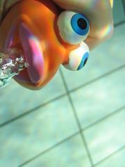 Little Fish #2 (Alison et Cedric) Tags: underwater powershot bubble bulle d10 waterquot quotunder