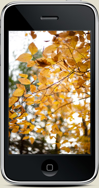 iPhone wallpaper Jamie Beck Photographer fall autumn 2009 fromme-toyou.tumbr.com