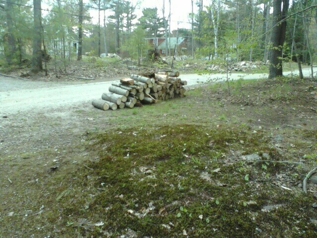 Pile of Wood we cut...