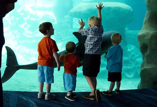 aquarium_6
