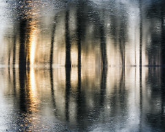 Frozen Reflection 2017 by Simon & His Camera (Simon & His Camera) Tags: ice frozen water reflection lake tree silhouette simonandhiscamera shade sunlight sunrise sun abstract winter contrast distorted gardens lines landscape nature outdoor pattern waterfront woods weather syon syonpark syonhousepark syonhouse symmetry forest