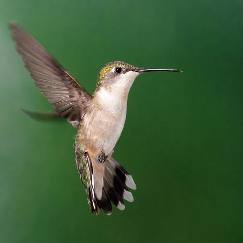rencontre colibris