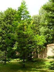 DSCN5782 (Pola87) Tags: musei pavia ortobotanico