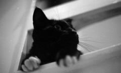 surveyor (RTMoynihan) Tags: white black macro cat dof tubes 1600 neopan extension