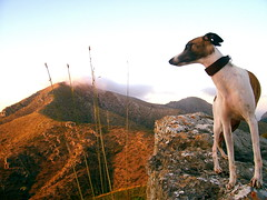 In the mountains (Dada Mar) Tags: dog mountains nature spain whippet mallorca thelittledoglaughed
