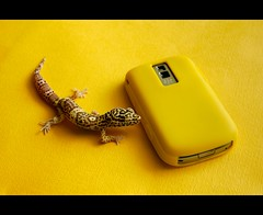 -::- Gecko!? -::- (-::-Mr.AD-::- *Uae*) Tags: pet yellow blackberry reptile albino gecko bb 9000 bold9000