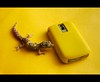 -::- Gecko!? -::- (-::-Mr.AD-::- *Uae*) Tags: pet yellow blackberry reptile albino gecko bb 9000 bold9000