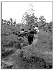 Leñadores1688 (-Karonte-) Tags: wood byn bosque indigenaschiapas indigenouschild niñosindigenas josemanuelarrazate
