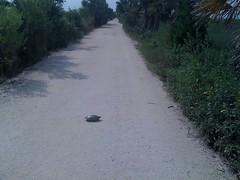 7-turtle