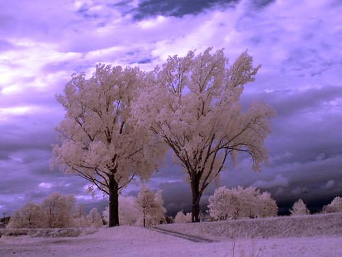 Zwei stolze Bäume am Donauufer