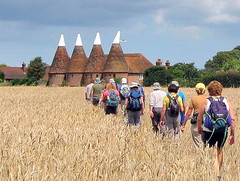 Approaching Ickham (Conundrum37) Tags: walking ramblers oasthouse oasts ickham