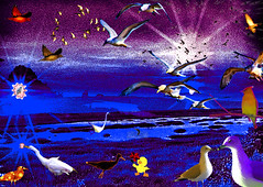 Night Birds at Play (Rusty Russ) Tags: blue sunset sea usa cloud color bird wet yellow night america swim photoshop manipulated river ma island solar fly photo yahoo duck google interesting swan flickr image wildlife air creative plum picasa system montage layer cs marsh typical newsroom tweety universe rare parker newbury soar newburyport imageediting refuge stockimages wizards manipulate funnypictures stumbleupon imagesphotos coolimages creativedigital freeimage colorimages creativepictures freeimages colorfulimages graphicsimages hotimages pictureimages aboutinteresting picturresof