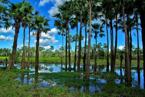 フリー画像| 自然風景| 森林/山林| 湖の風景| 樹木の風景| ブラジル風景|      フリー素材|