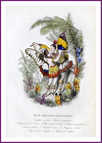 011--Les Papillons, métamorphoses terrestres des peuples de l'air- Pierre Amédée Varin