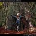 Ivana and Big Tree, Redwood national park, California