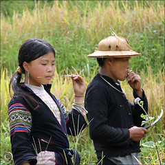 Rice harvest, a momentary break (NaPix -- (Time out)) Tags: portrait food black landscape asia rice father daughter harvest vietnam ricepaddies southeast sapa hmong muonghoavalley napix ricefoodlife