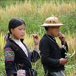 Rice harvest, a momentary break