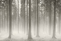 Polish Forest (Ben Heine) Tags: morning autumn trees wild