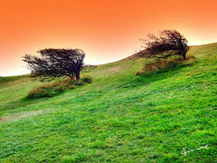 running up....... (Dr_Tariq) Tags: uk trees beauty grass sussex pair air eastbourne tariq englishchannel beachyhead