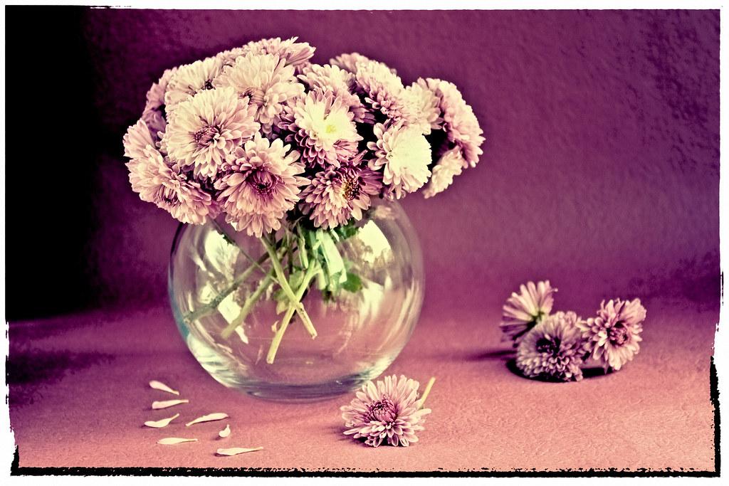 pink still life