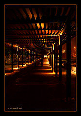 Like a roamer (Vasilis Mantas) Tags: canon thessaloniki 500d paralia explored   vmantas vmantasphotography