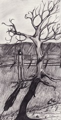 Somewhere Far Away From Here (aquilusdomini) Tags: man tree field pencil fence dead death sketch suicide hanging hang