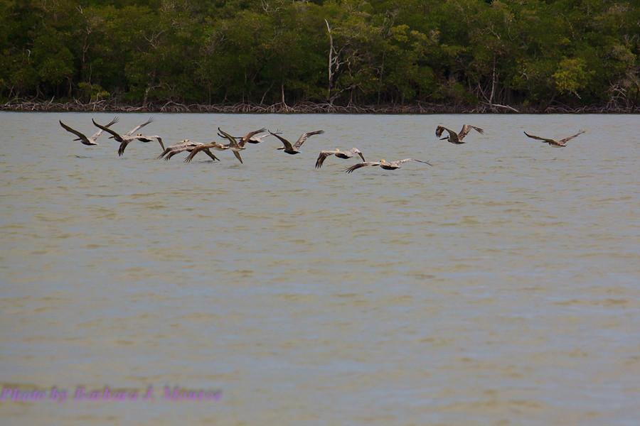 Everglades National Park-10,000 Islands (14 of 16)