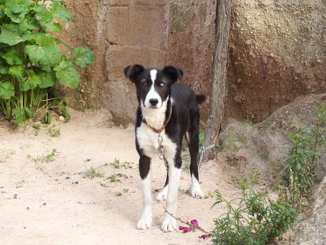 Uchisar民宿的狗