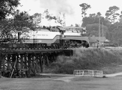 Golf course trestle, 4449 (clarkfred33) Tags: americanfreedomtrain aft 1976 clearwater golfcourse clearwatercountryclub famous famouslocomotive historic historiclocomotive vintage vintagephoto historicphoto clearwaterhistory blackandwhite trestle bridge railroadscene view sp4449 daylightlocomotive sphistory afthistory southernpacific telephotoview telephoto pinellascounty