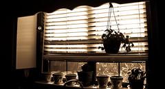 "Kitchen window ... waiting for curtains & ""stuff"" (yosinfla) Tags: sun moon window kitchen sepia prism seeds crucifix blinds brass loquat houseplants fridayafternoonatwork newwhitepaint"