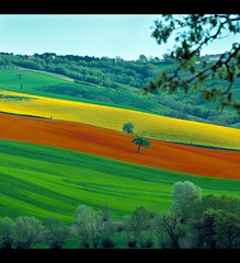 Landscape: Lines of Colors, green, orange and yellow. (Gianluca, very busy!) Tags: park new leica trip travel light vacation italy orange holiday color colour tree green art home nature colors beautiful yellow rural canon wonderful landscape geotagged photography landscapes photo interestingness spring perfect colorful europa europe italia image quality hill bluesky natura paisaje 100mm explore campagna land popular incredible landschaft colori breathtaking marche jesi ciccio collina ancona naturesfinest firstquality 40d platinumheartaward world100f theciccio theauthorsplaza