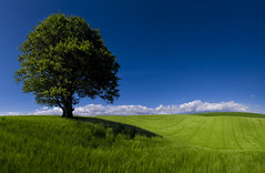 Green Miles (wentloog) Tags: uk panorama tree field wales canon landscape eos interestingness gallery britain farm pano cymru cardiff explore caerdydd 5d agriculture wfc 24105 ptgui canoneos5d ef24105f4l wentloog pantools welshflickrcymru stevegarrington