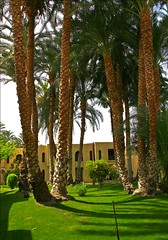 (903) Hotel garden / Luxor / Egypt (unicorn 81) Tags: africa travel plants nature trekking garden geotagged hotel colorful northafrica egypt palm egyptian egipto luxor 2009 gypten egitto egypte reise egypten rundreise roundtrip egipt gypte mapegypt misr nordafrika egypttrip april2009 gypten aegyptus  gyptusintertravel gyptenreise schulzaktivreisen meinjahr2009
