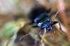 Beetle - 205/365