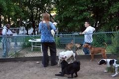 Dog Rape 2 (Venessa Nina) Tags: photography nina venessa fivefootmohawk venessaninaphotography