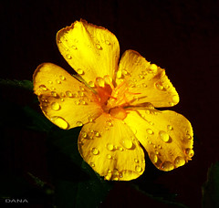 Sweet Droplets (Douano) Tags: flowers dana insects cebucity dandee blueshadows ouano canonizoom douano