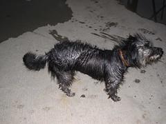 MARMARIS - Getting dry in a doggy way (Andra MB) Tags: trip dog chien holiday rain turkey easter trkiye pluie cano perro trkei hund 2009 regen marmaris turchia caine kpek ploaie turcia cine cineud