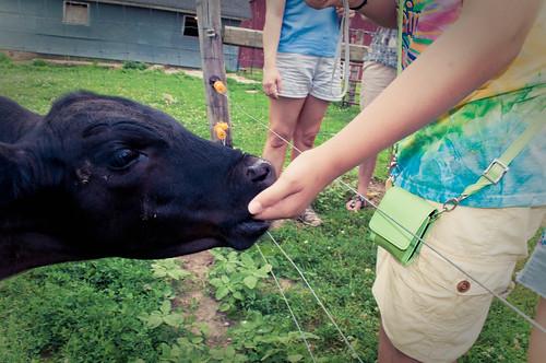 Mackenzie & Cow