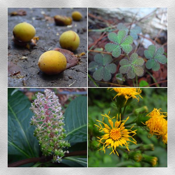 林道上的植物3